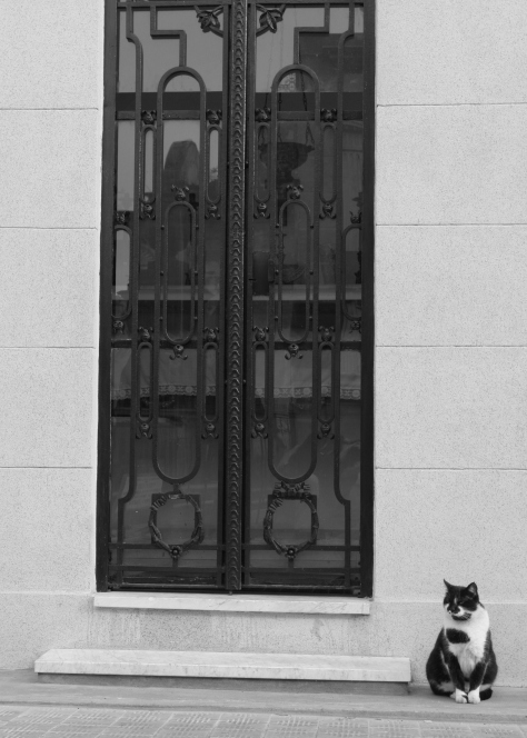 doorway with cat