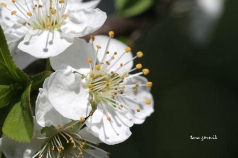 backyard bloom
