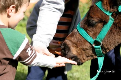 Elijah feeding the pony