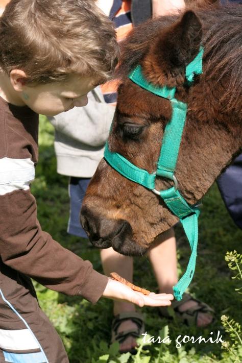 Malachi feeding the pony