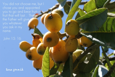 Fruit-bearers